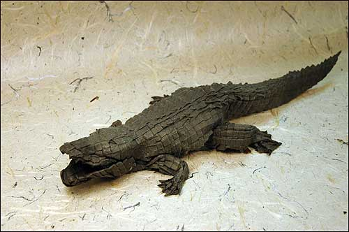 Alligator by Michael LaFosse